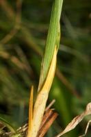 Photographie n°bb040355 du taxon