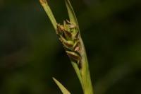 Photographie n°bb040356 du taxon