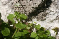 Photographie n°bb043156 du taxon