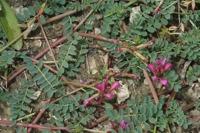 Photographie n°bb043945 du taxon
