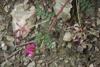 Photographie n°bb043949 du taxon