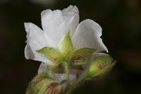 Photographie n°bb044655 du taxon