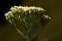 Photographie n°bb045203 du taxon