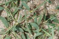 Photographie n°bb045968 du taxon