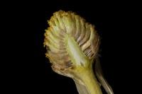 Photographie n°bb047461 du taxon