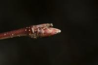 Photographie n°bb050350 du taxon