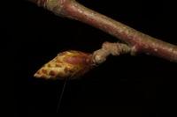 Photographie n°bb050351 du taxon
