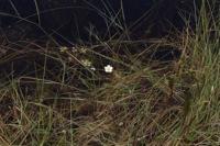 Photographie n°bb050860 du taxon
