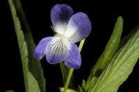 Photographie n°bb050976 du taxon