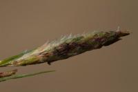 Photographie n°bb051015 du taxon