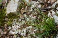 Photographie n°bb051175 du taxon