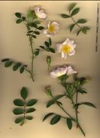 Photographie n°bb051980 du taxon