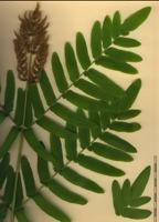 Photographie n°bb051982 du taxon
