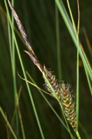 Photographie n°bb052426 du taxon