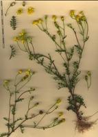 Photographie n°bb052633 du taxon
