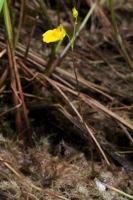Photographie n°bb052834 du taxon