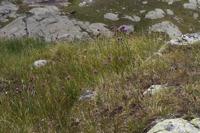 Photographie n°bb053692 du taxon