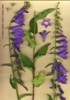 Photographie n°bb054018 du taxon