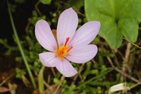Photographie n°bb054758 du taxon