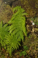 Photographie n°bb055362 du taxon
