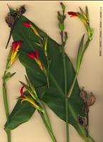 Photographie n°bb056307 du taxon