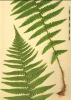 Photographie n°bb058025 du taxon