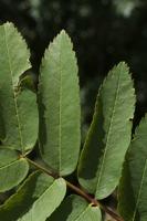 Photographie n°bb058474 du taxon