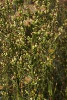 Photographie n°bb060695 du taxon