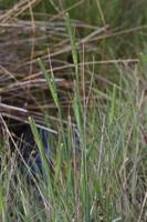 Photographie n°bb063855 du taxon