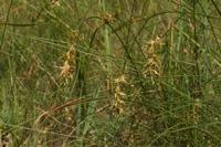 Photographie n°bb064383 du taxon