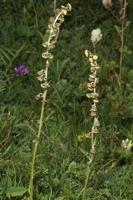 Photographie n°bb065463 du taxon