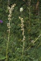 Photographie n°bb065465 du taxon