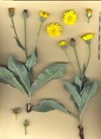 Photographie n°bb071863 du taxon