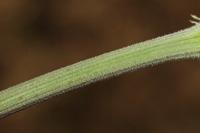 Photographie n°bb072038 du taxon