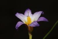 Photographie n°bb074028 du taxon