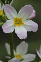 Photographie n°bb075853 du taxon