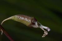 Photographie n°bb084617 du taxon