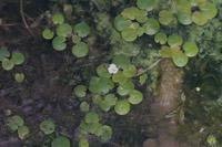 Photographie n°bb087034 du taxon