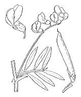 Photographie n°1043 du taxon