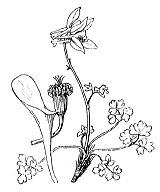 Photographie n°110 du taxon