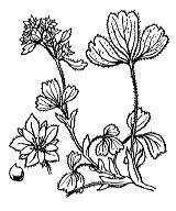 Photographie n°1109 du taxon
