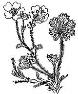 Photographie n°1143 du taxon