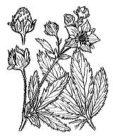 Photographie n°1147 du taxon