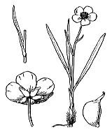 Photographie n°12 du taxon