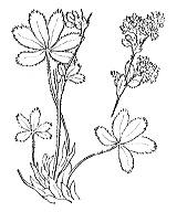 Photographie n°1245 du taxon