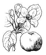 Photographie n°1264 du taxon