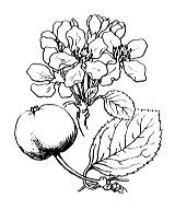 Photographie n°1265 du taxon