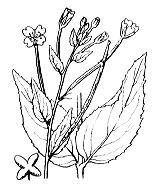Photographie n°1281 du taxon