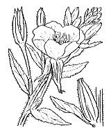 Photographie n°1295 du taxon