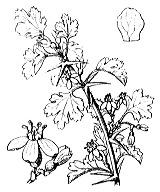 Photographie n°1397 du taxon